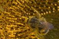 Free Humblebee Stock Photo - 1207980