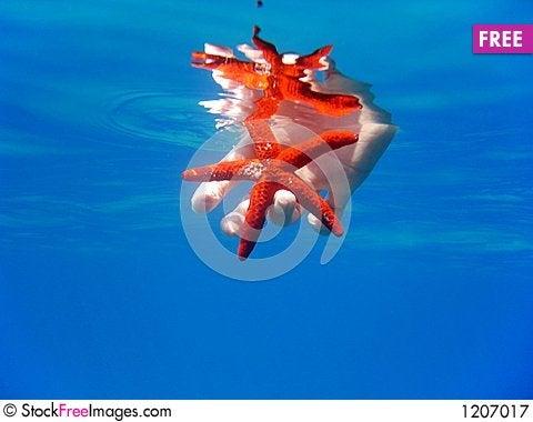 Bright red starfish Stock Photo