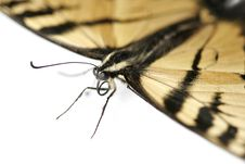 Free Butterfly Close-up Stock Image - 1200991