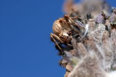 Free Spider Royalty Free Stock Photo - 1201035