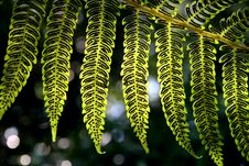 Free Fern Royalty Free Stock Photography - 1201317