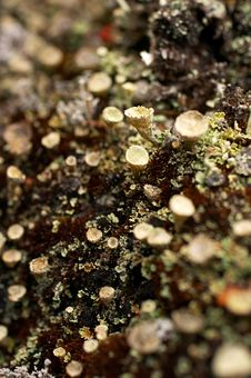 Free Northern Lichen Stock Images - 1201374