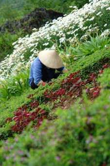 Free Asian Flower Worker In Garden Stock Photos - 1201613