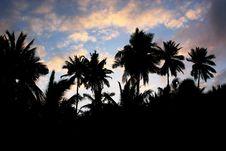 Free Coconuts Stock Photos - 1202003
