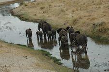 Free Elephant Walk Royalty Free Stock Images - 1204129