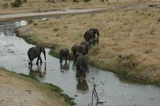 Free Elephant Walk Stock Photos - 1204133