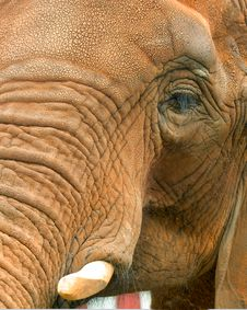 Free Elephant Stock Photography - 1205522