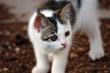 Free A Young Kitten Royalty Free Stock Photography - 1206657