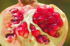 Free An Open Pomegranate Stock Photos - 1208693
