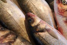 Free Foodfish Royalty Free Stock Image - 1208796