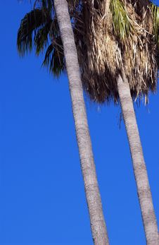 Free Palm Trees Stock Photo - 1209610