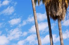 Free Palm Trees Stock Images - 1209624