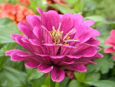 Free Red Daisy Macro Stock Photos - 1209823