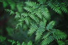 Free Close-Up Photography Of Fern Leaves Stock Photography - 120074792