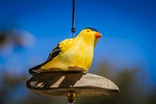 Free Bird, Beak, Yellow, Fauna Royalty Free Stock Photos - 120114038