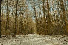 Free Path, Winter, Tree, Woodland Royalty Free Stock Images - 120114609
