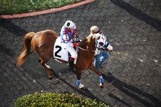 Free Horse, Jockey, Horse Like Mammal, Horse Racing Stock Photo - 120114690