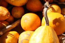 Free Vegetable, Local Food, Winter Squash, Produce Royalty Free Stock Image - 120114696