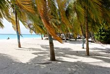 Free Palm Tree, Arecales, Tree, Beach Stock Images - 120115054