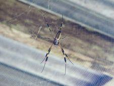 Free Spider, Arachnid, Invertebrate, Arthropod Stock Photography - 120115232