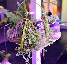 Free Flower, Purple, Flower Arranging, Floristry Royalty Free Stock Image - 120115306