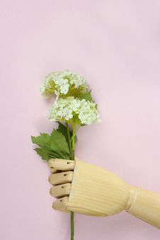 Free Brown Wooden Hand Holding White Hydrangea Flowers Stock Images - 120142614