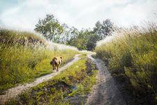 Free Medium-coated Tan Dog Running On Dirt Road Between Green Grass Near Trees Royalty Free Stock Photos - 120142668