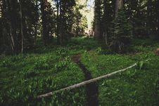 Free Photo Of Pathway On Forest Stock Images - 120192604