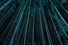 Free High-rise Trees During Night Royalty Free Stock Photo - 120192605