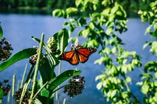 Free Butterfly On Leaf Royalty Free Stock Photography - 120192627