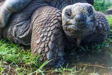 Free Closeup Photo Of Galapagos Tortoise Royalty Free Stock Images - 120361069