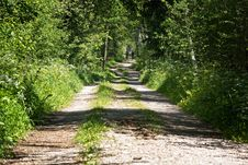 Free Path, Vegetation, Nature Reserve, Ecosystem Royalty Free Stock Photography - 120411587