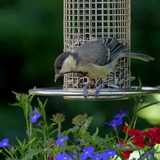 Free Bird, Fauna, Beak, Bird Feeder Royalty Free Stock Photo - 120411615