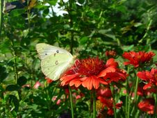Free Flower, Butterfly, Brush Footed Butterfly, Moths And Butterflies Stock Images - 120411814