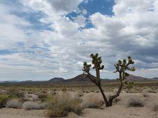 Free Sky, Cloud, Ecosystem, Vegetation Royalty Free Stock Photography - 120412147