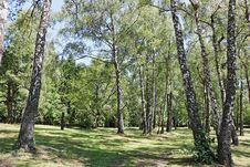 Free Tree, Ecosystem, Grove, Nature Reserve Stock Image - 120412331