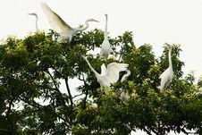 Free Bird, Flora, Beak, Egret Royalty Free Stock Image - 120482926