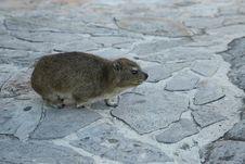 Free Mammal, Fauna, Rodent, Wildlife Stock Image - 120482931