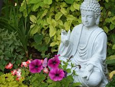 Free Plant, Flower, Garden, Flowering Plant Stock Photos - 120483043