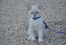 Free Cat, Small To Medium Sized Cats, Mammal, Cat Like Mammal Royalty Free Stock Photo - 120483085
