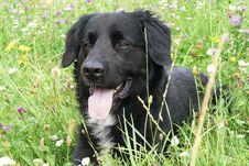 Free Dog, Dog Like Mammal, Dog Breed, Borador Stock Photo - 120483110