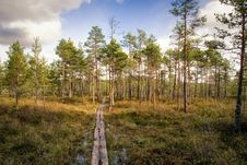 Free Ecosystem, Tree, Path, Wilderness Stock Photos - 120483193