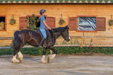 Free Horse, Bridle, Rein, Hunt Seat Royalty Free Stock Photo - 120483265