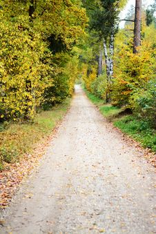 Free Path, Road, Nature, Leaf Royalty Free Stock Image - 120483276