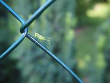 Free Close Up, Plant Stem, Insect, Grass Royalty Free Stock Photo - 120483295
