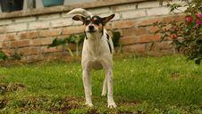 Free Dog Breed, Dog, Dog Like Mammal, Grass Stock Photo - 120483430