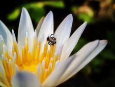 Free Flower, Flora, Macro Photography, Bee Stock Photo - 120483450