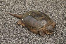 Free Emydidae, Turtle, Terrestrial Animal, Reptile Stock Photos - 120483683