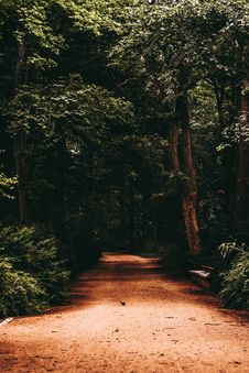 Free Pathway Surrounded By Trees Royalty Free Stock Image - 120524066