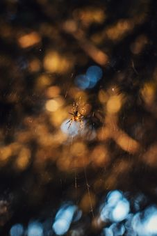 Free Macro Photography Of Brown Spider Stock Image - 120524131